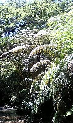 Tataki_tree