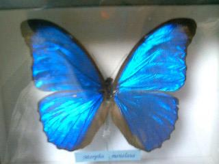 Butterfly004
