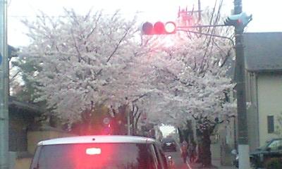 Sakurashimmachi_cherry