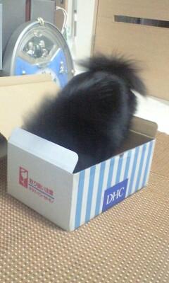 Pinoko_box_3