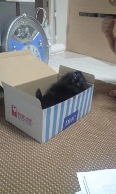 Pinoko_box_4