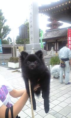 Kawasakidaishi_pinoko_2