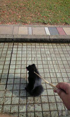 Kawasakidaishi_pinoko_3