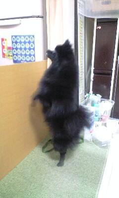 Beeping_pinoko_2
