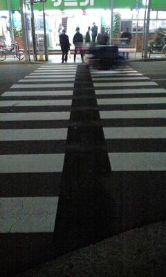 Sancha_zebra