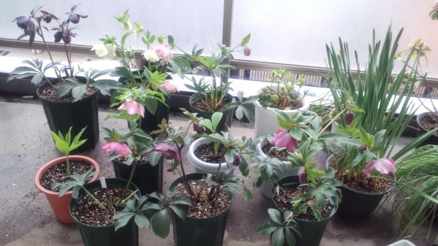 Our_garden