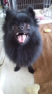 笑う犬の生活。