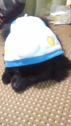 Pinoko_shinkansen_5