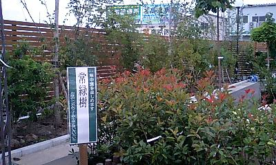 Joyfulhonda_mizuho4
