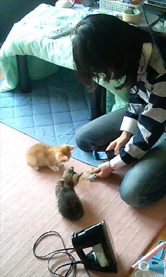 Kittens_koyuki