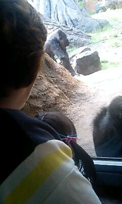 Majo_a_gorilla_4