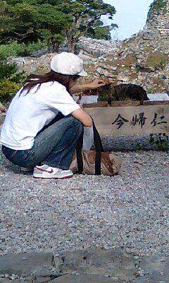 Nakijin_cat_001