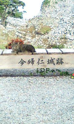 Nakijin_cat_002