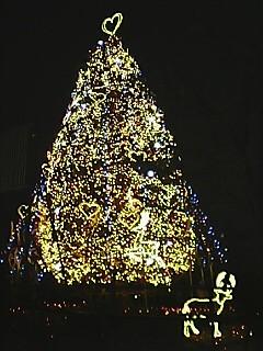 Odaibatree