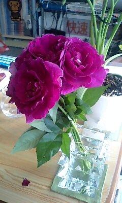 Rose_myshot
