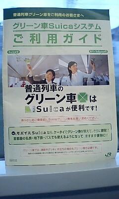 Shoshin_green_5